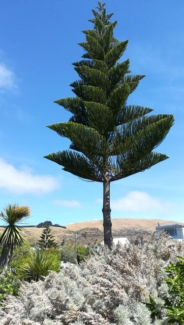 Sumner Beach, NZ