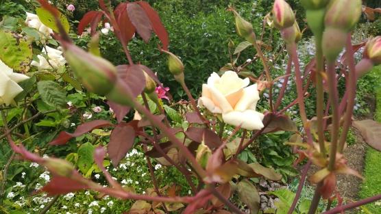 Botanic Gardens, Christchurch, NZ