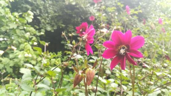 Botanic Gardens, Christchuch, NZ