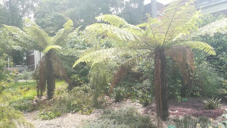 Botanic Gardes, Christchurch