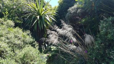 Hinewai Reserve, NZ